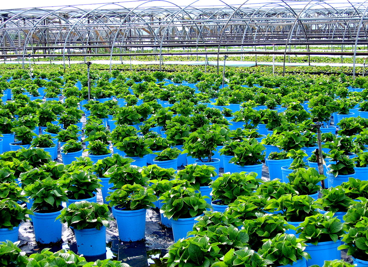 buy production and wholesale nursery business