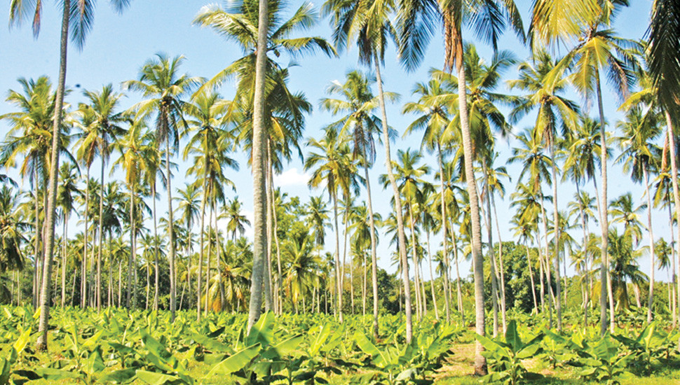 buy Coconut Land and Poultry Farm