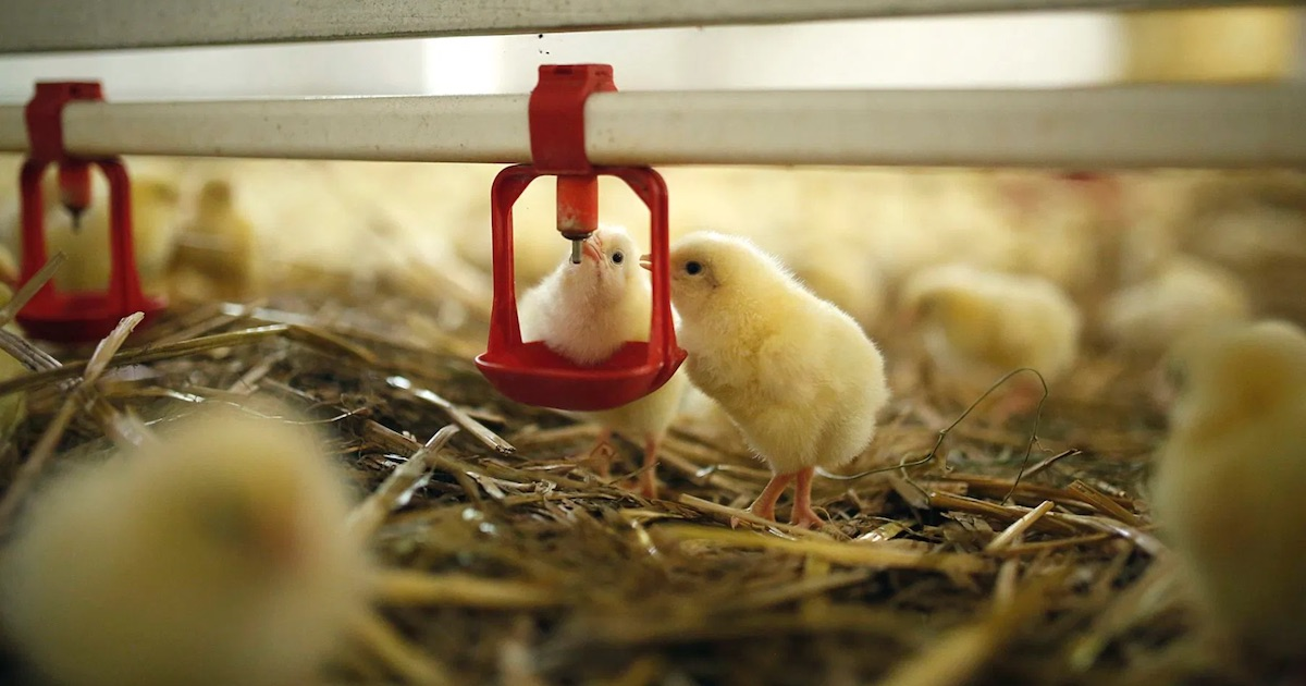 buy poultry farm in Poland