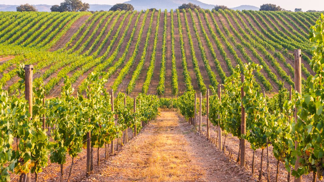 winery and vineyard in the usa for sale