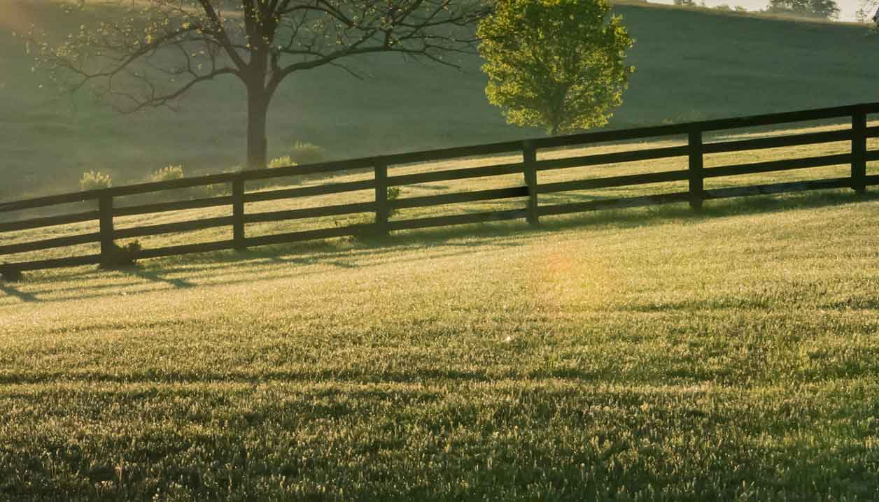 buy Paddock Maintenance And Fencing Business
