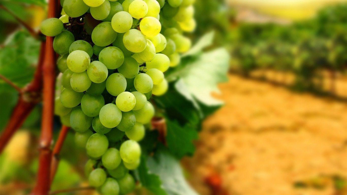 buy Farm With Vineyard