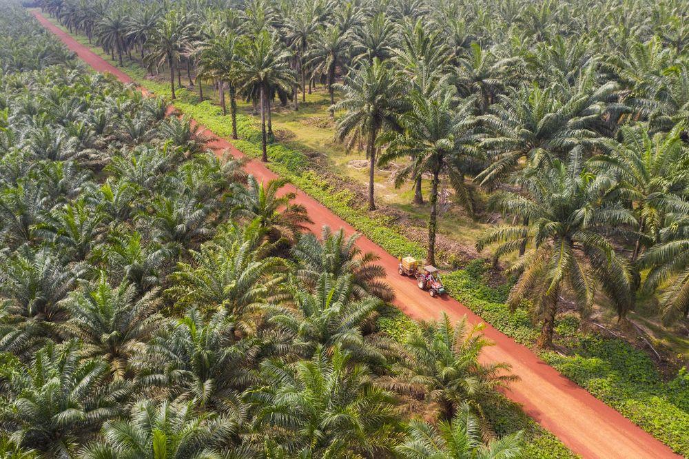 buy Vegetable oil factory in Nigeria