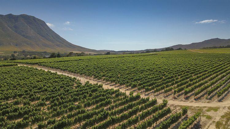 Ferme viticole de caractère à Hermanus