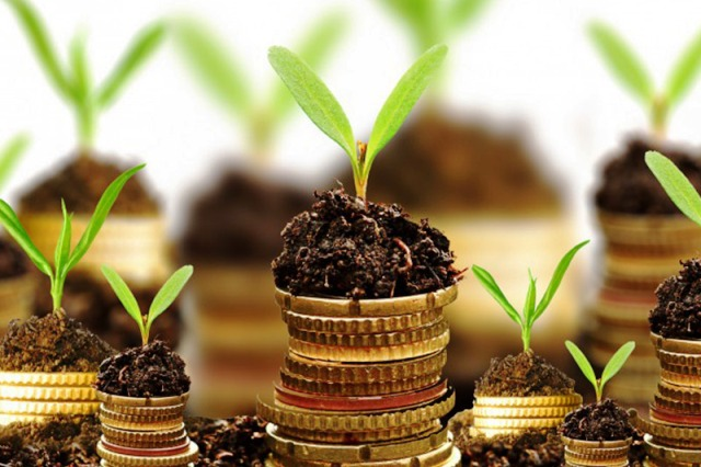 Well-managed Agro Growing / Processing Business