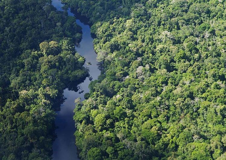 buy rainforest