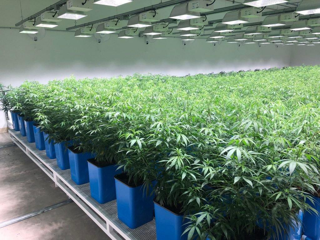 Cannabis grow facility for sale
