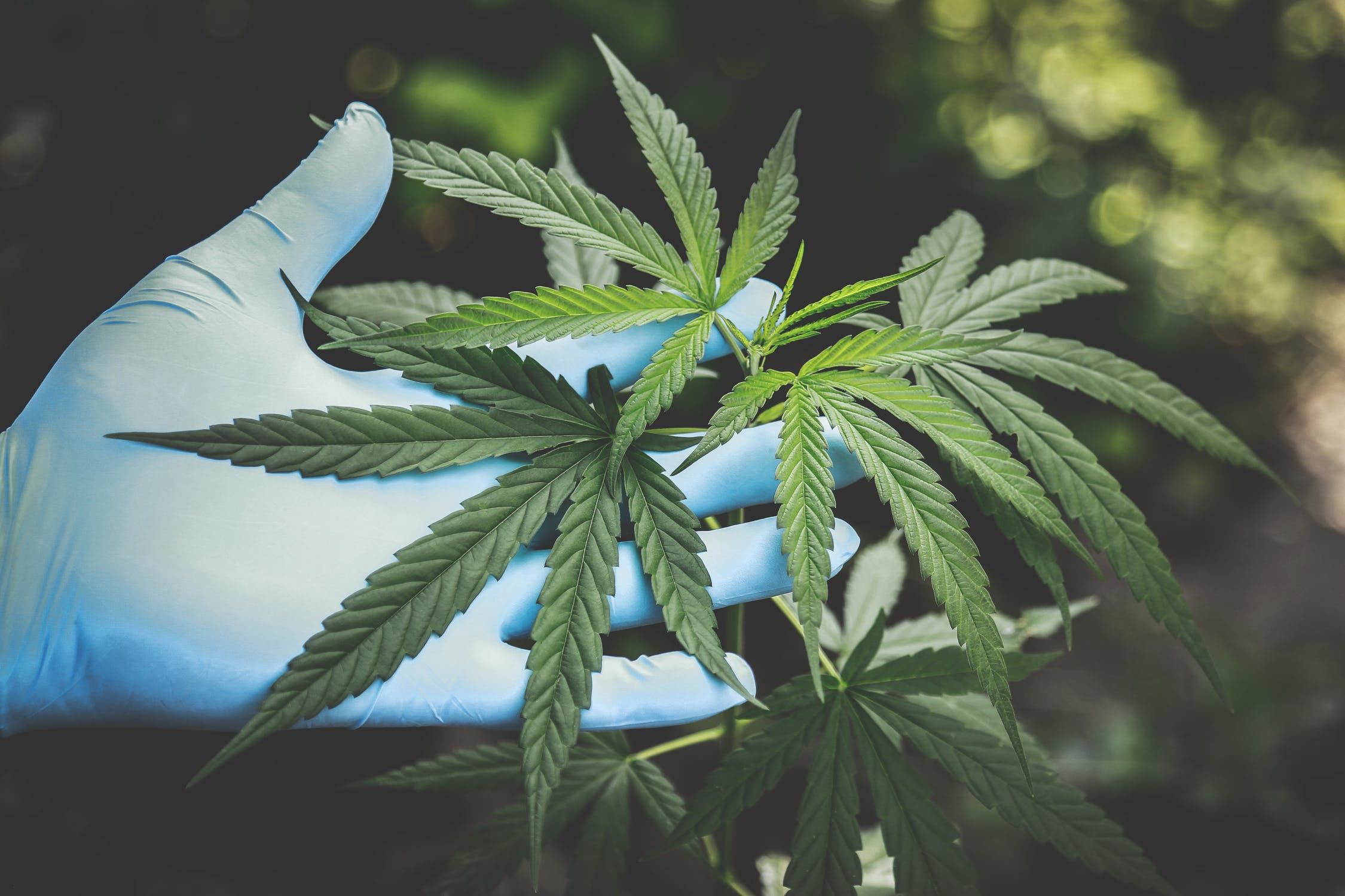 Water Marijuana Investment in Oklahoma