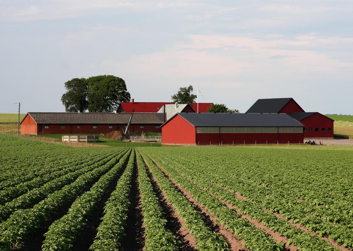 Farm And Land In Georgia