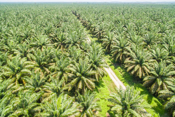 Vegetable oil factory with palm plantation in Nigeria