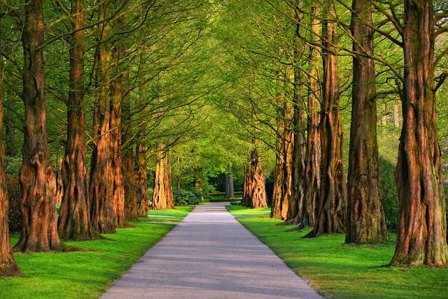 Well-established tree care business in the United Kingdom