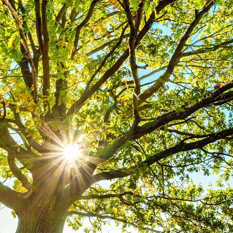 Tree Service Company In The USA